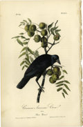 Antiques:Posters & Prints, Common American Crow Audubon Royal Octavo Print. Plate number 225headlines the American Crow. The male of the species is sh...