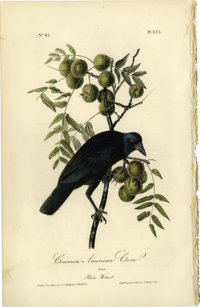 Common American Crow Audubon Royal Octavo Print. Plate number 225 headlines the American Crow. The male of the species i...