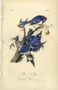 Antiques:Posters & Prints, Blue Jay Audubon Royal Octavo Print. Plate number 231 features amale and two female Blue Jays sitting on the Trumpet Flower...