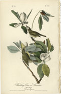Antiques:Posters & Prints, Warbling Vireo Audubon Royal Octavo Print. The male and femalespecies of this bird, as they rest on top of the Swamp Magnol...
