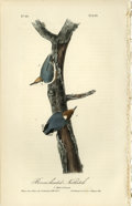 Antiques:Posters & Prints, Brown-headed Nuthatch Audubon Royal Octavo Print. Print number 249highlights the male and female of this species. One page ...