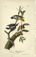 Antiques:Posters & Prints, Downy Woodpecker Audubon Royal Octavo Print. Plate number 263depicts the male and female Downy Woodpecker on a colorful pla...(Total: 1 sets)