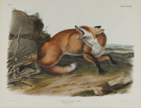 Audubon Imperial Quadruped Print: Vulpes Fulvus; American Red Fox. This lot features plate LXXXVII, the American Red Fox...