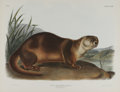 Antiques:Posters & Prints, Audubon Imperial Quadruped Print: Lutra Canadensis; Canada Otter. This lot features plate CXXII, the Canada Otter. Audub...