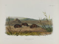 Antiques:Posters & Prints, Audubon Imperial Quadruped Print: Arvicola Borealis;Northern Meadow-Mouse. This lot features plate CXXIV, the Northern...