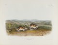 Antiques:Posters & Prints, Audubon Imperial Quadruped Print: Dipodomys Phillipsii;Pouched Jerboa Mouse. This lot features plate CXXX which shows t...