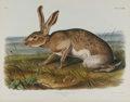 Antiques:Posters & Prints, Audubon Imperial Quadruped Print: Lepus Texianus; Texian Hare. This lot features plate CXXXIII, the Texian Hare. The mal...