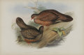 Antiques:Posters & Prints, J. Gould Elephant Folio Print: Galloperdix Spadiceus. Thisprint features the Rufous Spur-Fowl, native to the southern p...