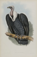 Antiques:Posters & Prints, J. Gould Elephant Folio Print: Gyps Bengalensis. This printfeatures the Bengal Vulture, native to India and some parts ...