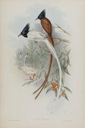 Antiques:Posters & Prints, J. Gould Elephant Folio Print: Muscipeta Paradisi. This print features the Paradise Flycatcher, native to India and some...