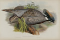 Antiques:Posters & Prints, J. Gould Elephant Folio Print: Pucrasia Macrolopha. This print features the Himalayan Pucras Pheasant; a native of the c...