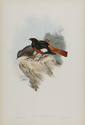 Antiques:Posters & Prints, J. Gould Elephant Folio Print: Ruticilla Erythrogastra. This print features the Great White-Capped Redstart, native to t...