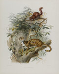 Antiques:Posters & Prints, Joseph Wolf Elephant Folio Print: Felis Bengalensis; Bengal Leopard Cat. This image is from J. Wolf and J. Smit's A Mo...