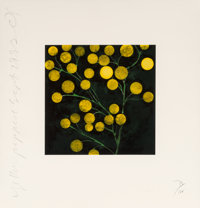 Donald Sultan (b. 1951) Yellow Peppers, from the Fruits and Flowers III suite, 1993 Scree