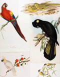 Books:Prints & Leaves, [Ornithology]. Group of Fourteen Modern Prints Depicting VariousBird Species. Various publishers and dates....