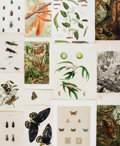 Books:Prints & Leaves, [Engravings and Prints]. Group of Over a Hundred Color Engravingsand Prints of Insects. Various publishers and dates.... (Total: 100Items)