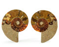 Fossils:Cepholopoda, Sliced Ammonite Pair. Cleoniceras sp.. Cretaceous. Madagascar.4.08 x 3.49 x 0.60 inches (10.36 x 8.86 x 1.53 cm). ... (Total:2 Items)