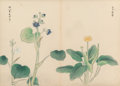 Fine Art - Work on Paper:Watercolor, Japanese School (20th Century). Asian Fan and Two Botanicals (three works). Watercolor on paper, each. 11-1/4 x 15-1... (Total: 3 Items)