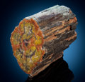 Fossils:Paleobotany (Plants), Contoured Petrified Wood. Araucarioxylon arizonicum.Triassic. Chinle Formation. Arizona, USA. ...