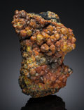 Minerals:Cabinet Specimens, Mimetite var. Campylite . Blea Gill, Caldbeck Fells.North and Western Region (Cumberland). Cumbria,England. ... (Total: 2 Items)