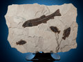Fossils:Fish, Irregular Inlay Accent Mural. Notogoneus sp. and Priscacarasp.. Eocene. Green River Formation. LincolnCounty...