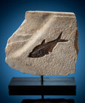 Fossils:Fish, Small Fossil Fish Sculpture. Diplomystus sp. and Knightia sp.. Eocene. Green River Formation. Lincoln County,... (Total: 2 Items)