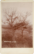 Photography:Cabinet Photos, Most Unusual Cabinet Photo of Burial in Trees. ...