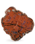 Fossils:Paleobotany (Plants), Petrified Wood Slab. Araucarioxylon arizonicum. Triassic. ChinleFormation. Arizona, USA. 8.94 x 7.99 x 0.86 inches (22.70...