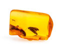 Amber, Amber with Inclusion. Succinite. Eocene. Baltic Coast.Kaliningrad, Russia. 1.01 x 0.69 x 0.38 inches (2.57 x 1.75 x 0.96...