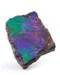 Fossils:Cepholopoda, Ammolite Fossil. Placenticeras sp.. Cretaceous. BearpawFormation. Southern Alberta, Canada. 1.51 x 1.03 x 0.30 inches(3....