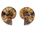 Fossils:Cepholopoda, Sliced Ammonite Pair. Cleoniceras sp.. Cretaceous. Madagascar.2.39 x 1.94 x 0.54 inches (6.07 x 4.93 x 1.37 cm). ... (Total:2 Items)