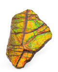 Fossils:Cepholopoda, Ammolite Fossil. Placenticeras sp.. Cretaceous. BearpawFormation. Southern Alberta, Canada. 3.22 x 2.11 x 0.37 inches(8....