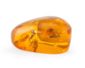Amber, Amber with Inclusions. Hymenaea protera. Miocene. DominicanRepublic. 0.94 x 0.60 x 0.48 inches (2.40 x 1.53 x 1.23 cm)...