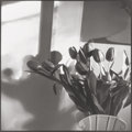Photographs:Gelatin Silver, Bruce Cratsley (American, 1945-1998). New Jersey Tulips, 1985. Gelatin silver. 18-1/4 x 18-1/4 inches (46.5 x 46.4 cm). ...