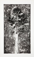 Prints:Contemporary, Jim Dine (b. 1935). The Pine in a Storm of Aquaint, 1978.Etching and aquatint on Rives paper. 57-1/2 x 31-3/4 inches (1...
