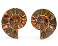 Fossils:Cepholopoda, Sliced Ammonite Pair. Cleoniceras sp.. Cretaceous. Madagascar.2.39 x 2.23 x 0.51 inches (6.08 x 5.67 x 1.29 cm). ... (Total:2 Items)