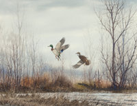 David Hagerbaumer (American, 1921-2014) Two Ducks in Flight, 1966 Watercolor on paper 16-1/4 x 21