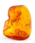 Amber, Amber with Inclusions. Succinite. Baltic Coast. Russia. 1.57 x 1.28 x 0.61 inches (3.99 x 3.24 x 1.54 cm). ...