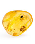 Amber, Amber with Inclusions. Hymenaea protera. Miocene. Dominican Republic. 0.88 x 0.73 x 0.37 inches (2.23 x 1.85 x...