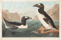 Books:Natural History Books & Prints, John James Audubon. Great Auk. [London: circa 1836]. Hand-colored aquatint engraving by Robert Havell, from the ...