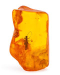 Amber, Amber with Inclusions. Succinite. Eocene. Baltic Coast.Kaliningrad, Russia. 1.35 x 0.81 x 0.49 inches (3.42 x 2.06 x1.24...