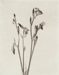 Photographs:Platinum-palladium, Jeanne Flowers (American, 20th Century). Iris I, 1996. Platinum-palladium, 2000. 9-1/2 x 7-1/2 inches (24.1 x 19.1 cm). ...