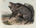 Fine Art - Work on Paper:Print, After John James Audubon (American, 1785-1851). American Bison,Bos Americanus (No. 12, Plate LVII) and Collared Pecca...(Total: 2 Items)
