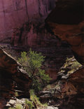 Photographs:20th Century, ELIOT PORTER (American 1901-1990). Coyote Gulch, EscalanteRiver, August 17, 1971, 1980. Dye-transfer print, mounted.15...
