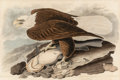 Fine Art - Work on Paper:Print, After John James Audubon (American, 1785-1851). White-headedEagle, Falco Leucocephalus (No. 7, Plate 31) from Birds ofAm...