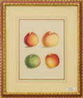 Prints, A Set of Six Botanical Lithographs of Apples. 19-3/4 inches high x 16-3/4 inches wide (50.2 x 42.5 cm) (framed). ... (Total: 6 Items)