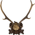 Decorative Arts, Continental, A Continental Deer Antler Trophy Mount. 23 inches high x 22 incheswide (58.4 x 55.9 cm). ...