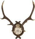 Decorative Arts, Continental, A Continental Deer Antler Trophy, mid-20th century. 25 h x 21 w x17 d inches (63.5 x 53.3 x 43.2 cm). ...