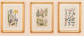 Paintings, Twenty-Four European Hand Colored Botanical Engravings, after Emanuel Sweert. 21-1/4 h x 16 w x 1 d inches (54.0 x 40.6 x 2.... (Total: 24 Items)