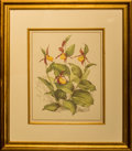 Works on Paper, Seven Botanical Prints in Giltwood Frames. 19-1/2 inches high x 16-3/4 inches wide (49.5 x 42.5 cm) (framed). ... (Total: 7 Items)